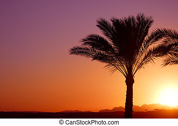 palmtree sunset - tropical sunset and palmtree