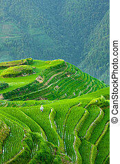Rice terraces of longshen in china - Dramatic view over rice...
