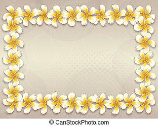 White plumeria flowers frame - White plumeria, frangipani...