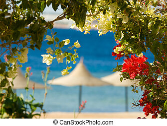 flowers and tropcal beach in the background