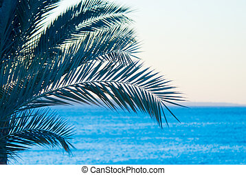 tropical palmtree and ocean
