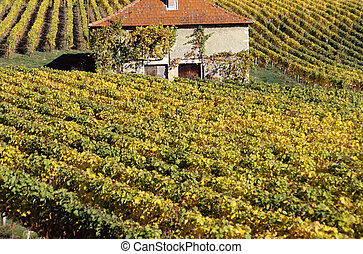 Vineyards in autumn and red roof house in Savoy, France -...