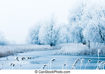 beautiful winter landscape scene with frozen trees and birds...