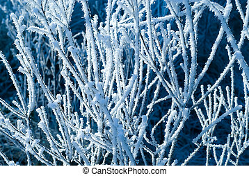 close-up of frozen trees in winter
