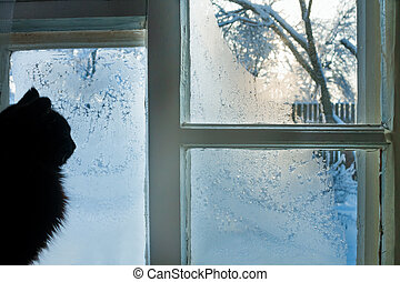 cat at a window - the cat looks at the street through the...