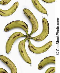 Bananas are arranged in floral pattern. Musa X paradisiaca...