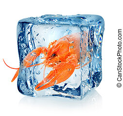 Crawfish in ice cube isolated on a white background