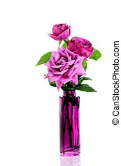 Beautiful roses in vase over white - Beautiful purple roses...