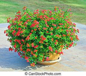 rojo, flores, ollas