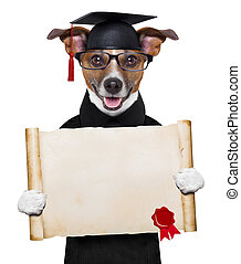 garduate dog  - happy graduate dog holding a big diploma