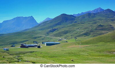 Pyrenees mountains and cows