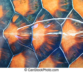 Turtle carapace Background