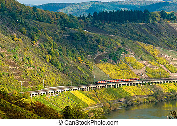 vineyards, train and forest - vineyards and forest along the...