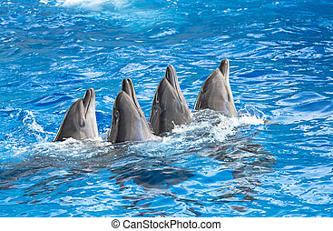 Dolphins in the water park - Dolphins splashe of sea water,...