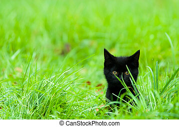cute kitten in grass - a cute black kitten in the grass