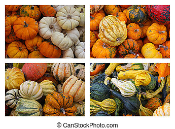 Gourds and Pumpkins - An Assortment Of Gourds and pumpkins...