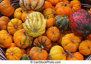 Gourds - An Assortment Of Gourds in the basket