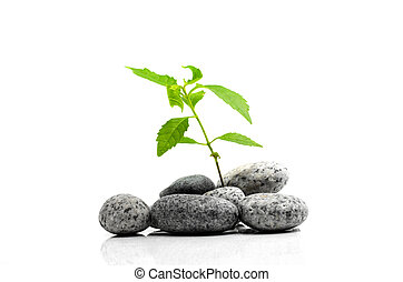 Zen stone with bamboo leaf on white background. Spa concept