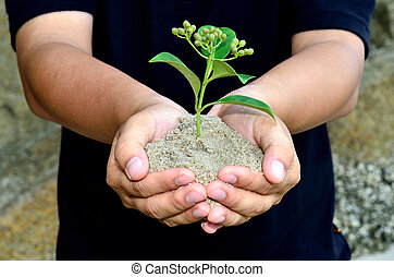 Human hands holding little sprout with care