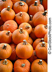 Little pumpkins on display at farm market