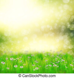 Field of daisies - Spring, summer background with 3d white...