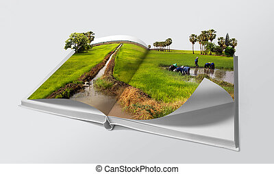 Open book in green rice fields