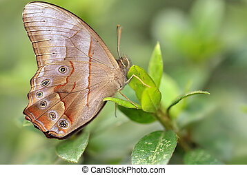 a beautiful butterfly on leaf