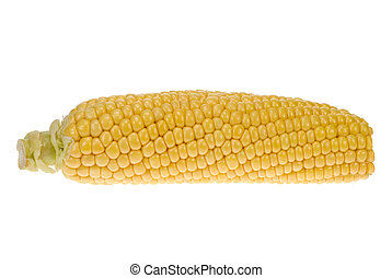isolated corn - fresh corn isolated on a white background
