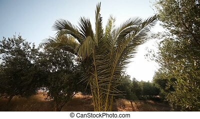 Garden With Palm tree and olive trees - video footage of a...