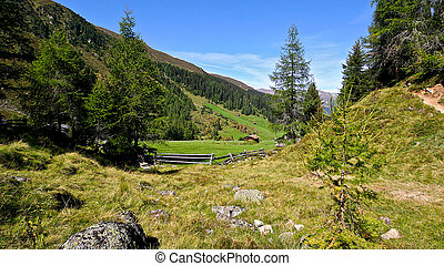 Fresh green grass in Alpine meadow surrounded by forests and...
