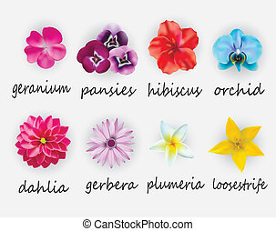flowers set - vector illustration of floral set, including...