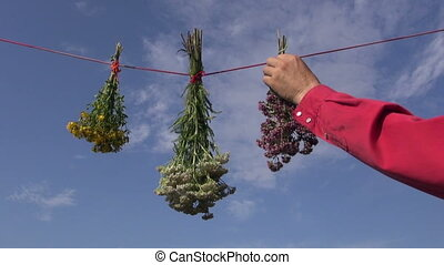 hanging fresh medical herbs bunch on red string. St Johns...