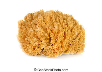 Bath sponge over white background