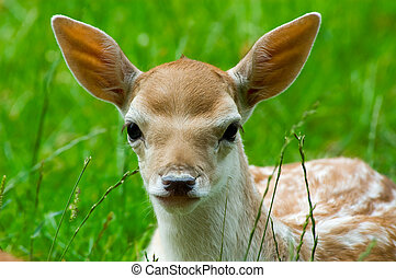 cute baby deer - portrait of a cute baby deer