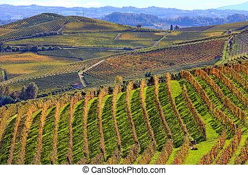 Hills and vineyards in autumn in Piedmont, Italy. - View of...