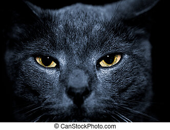 mean looking cat - beautiful portrait of a mean looking cat...