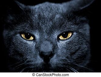má, olhar, gato