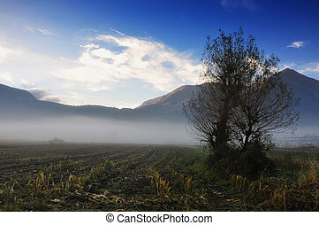 Tree with fog and mountains - Tree with fog on field and...