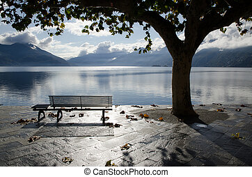 Bench and a tree on the lakefront in backlight - Bench and...