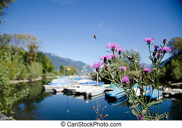 Small port with flowers and a flying bee with mountains and...