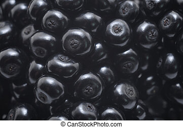 Elderberry fruit - nature background consisting of berries...