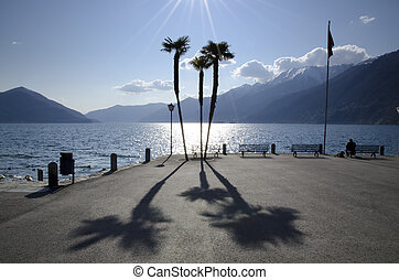 Palm trees on the lakefront - Palm trees with shadows on the...