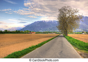 Road and trees on the field with mountain and blue sky with...