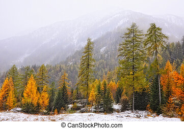 Autumn tree in the mountain with fog and snow
