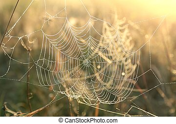Spider web on a meadow illuminated by the rising sun