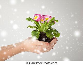婦女的, 土壤, 花, 藏品, 手