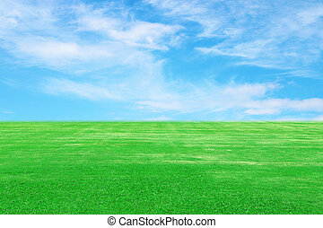 green grass field with sky