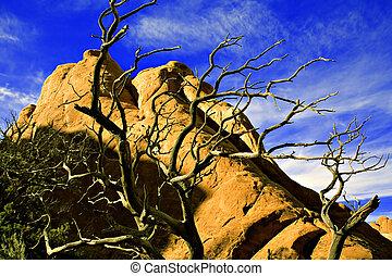 Desert skeleton - Dessicated desert Cedar tree outlined in...