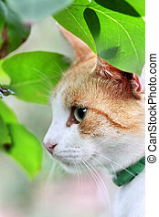Beautiful white - red cat is in the green leaves
