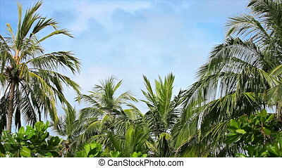 Palms grove swaying on the wind - Video 1920x1080 - Palms...